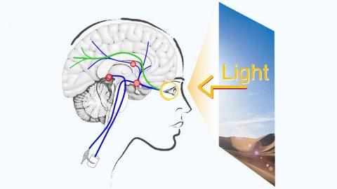 Aktuell forskning om ljus